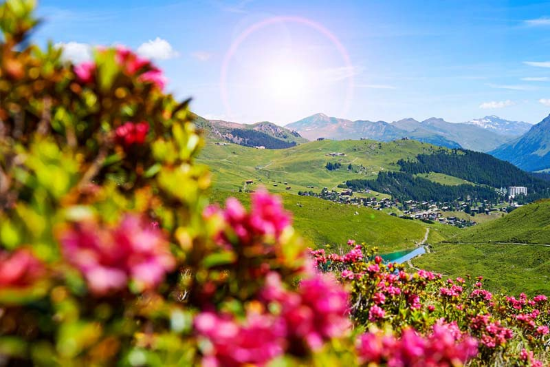 arosa-sommer in the mountains